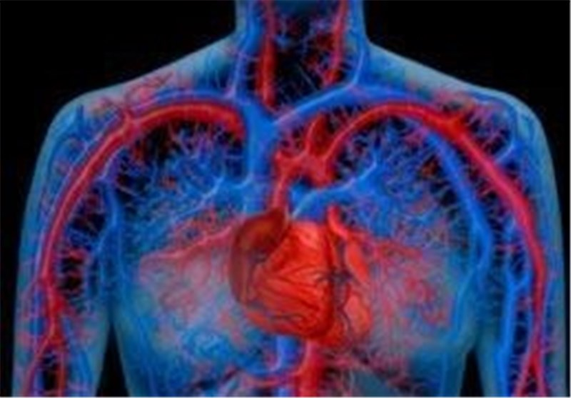 Heart's Own Immune Cells can Help It Heal: Study