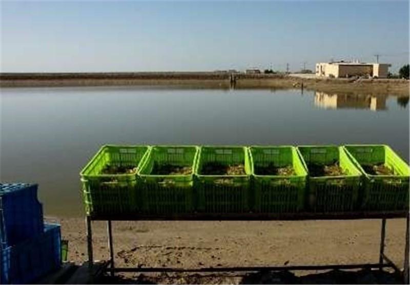 شهرکهای شیلاتی در استان بوشهر ایجاد میشود