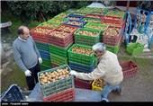 """33 هزار تن """"کیوی"""" در شهرستان رودسر تولید شد"""
