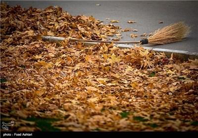 Iran's Beauties in Photos: Autumn in Tehran