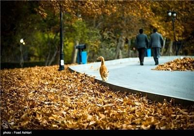 Iran's Beauties in Photos: Autumn