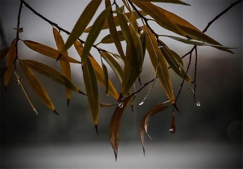 بارش باران اصفهان 12