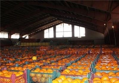 زمان توزیع میوه شب عید مشخص شد/ 25هزار تن سیب، 40هزار تن پرتقال آماده ورود به بازار