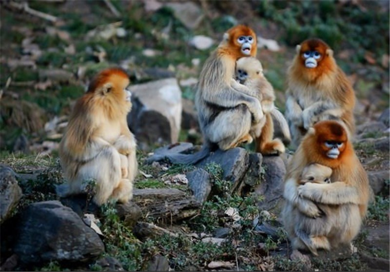 Monkeys Can Learn to See Themselves in Mirror