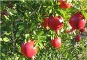 باغ انار