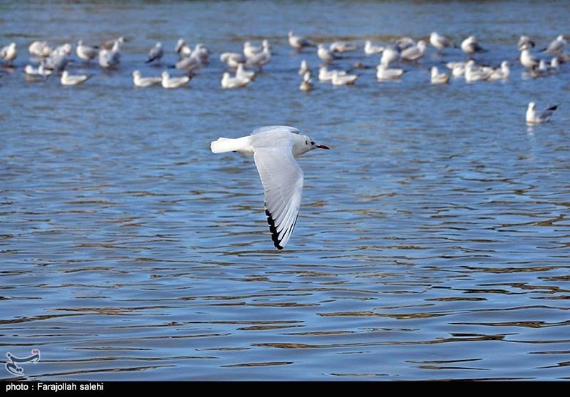 آغاز مهاجرت پرندگان به نوار ساحلی سیستان و بلوچستان