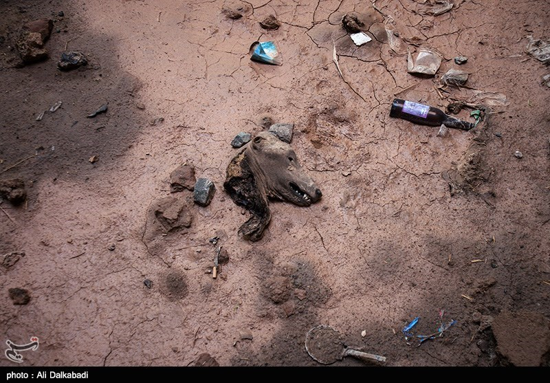 http://newsmedia.tasnimnews.com/Tasnim//Uploaded/Image/1393/10/09/139310091135376394397174.jpg