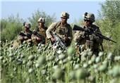 روسیه: کشت مواد مخدر افغانستان در حضور آمریکا و ناتو به اوج رسید
