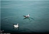 مرغان دریایی - بوشهر