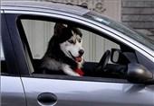 درخواست مردم یزد از دادستانی برای برخورد با سگگردانی