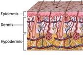 Skin Microbes Trigger Specific Immune Responses