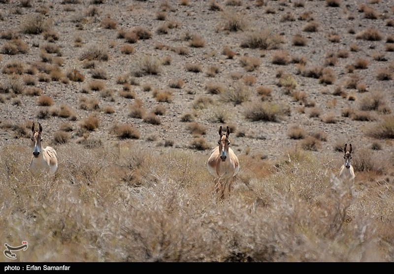 Protected Area of Bahra-e Goor Near Iran's Southern Shiraz City