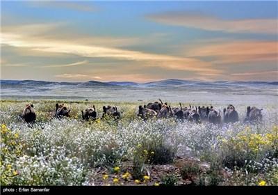 Bahram-e Gur Protected Area in Iran's Shiraz