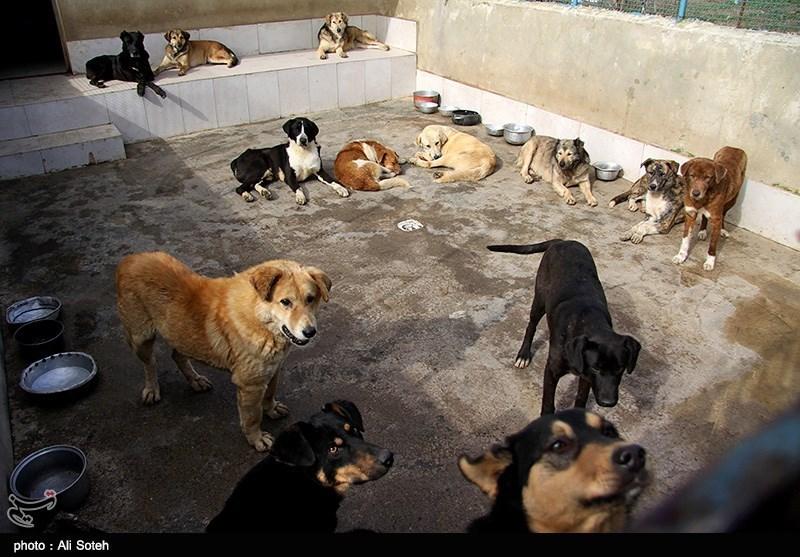مرکز نگه داری از حیوانات خانگی - رشت