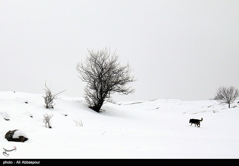 طبیعت زیبای زمستانی در کلیبر آذربایجان شرقی