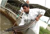 بزرگترین مجتمع ماهیان خاویاری در استان گلستان احداث میشود