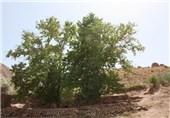 «درخت چنار» و «دودکشهای جن» اردبیل به ثبت ملی رسید