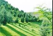 کمربند سبز
