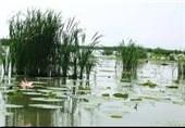 70 تالاب کشور با لایروبی خشک شد/میلیاردها تومان برای لایروبی تالاب انزلی هدر رفت