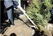 فرهنگ درختکاری در جامعه نهادینه شود