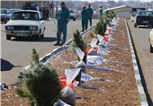 1000 درخت رایگان در هندیجان توزیع شد
