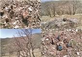 وجود 40 درصد آب شیرین در جنگلزاگرس؛ شتاب برای نجات درختان بلوط