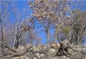 برای نخستین بار تنه درختان در استان اردبیل بیمه میشود