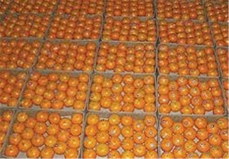 پای نارنگی قاچاق به خردهفروشیهای مشهد باز شد