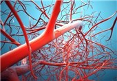 Blood Vessels Sprout under Pressure