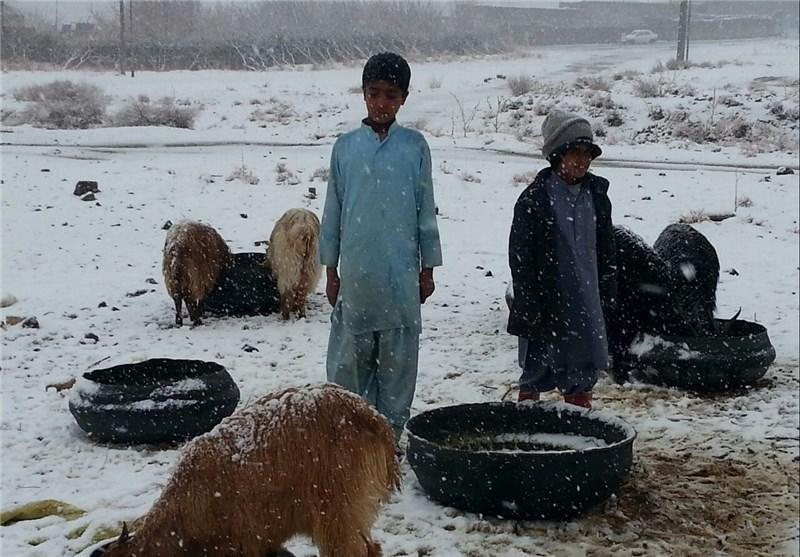 خسارات زیادی به دامهای روستاییان خاش وارد شد
