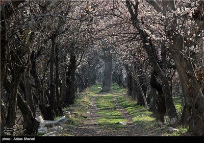 Photos: Spring Blooms in Iran's Northern Province of Alborz