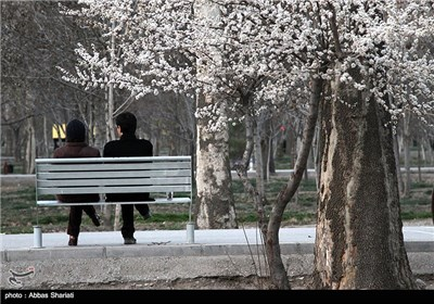 Spring Blooms in Iran's Northern Province of Alborz