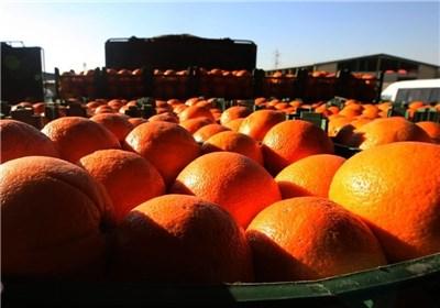کشف ۱۰ تن پرتقال فاسد از سردخانههای یک شرکت دولتی