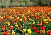 جشنواره ملی بهار در مشگینشهر برگزار میشود