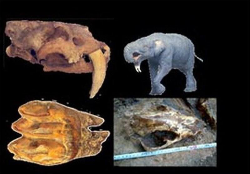 موزه فسیل مراغه