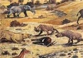 Animal Foraging Tactics Unchanged for 50 Million Years