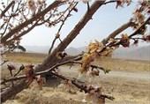 کشاورزان بخوانند؛ چگونه از باغات خود در برابر سرمازدگی محافظت کنیم؟