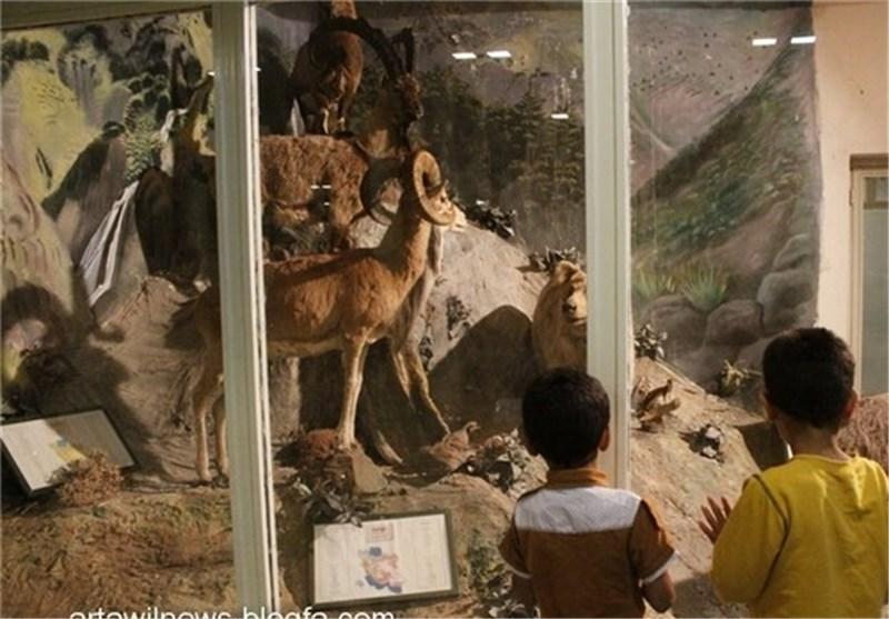 معرفی موزه تاریخ طبیعی اردبیل توسط شیراز هوم 