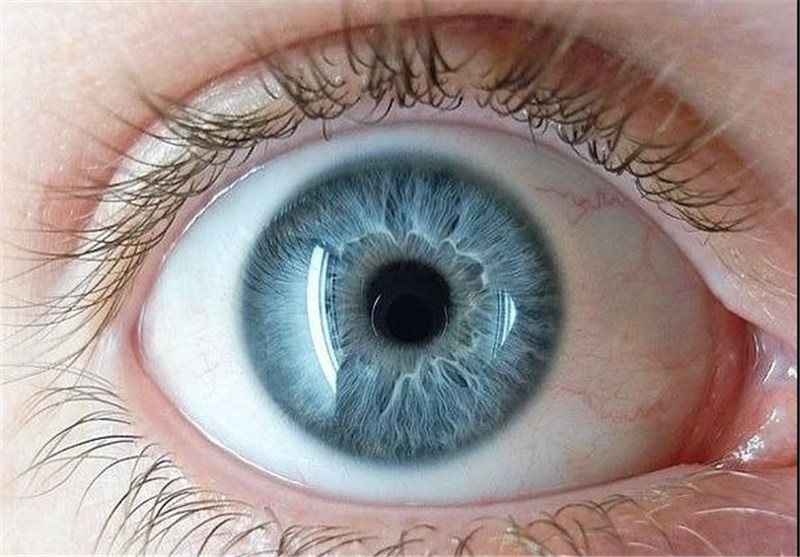 New Neural Pathway Found in Eyes, Aids in Vision