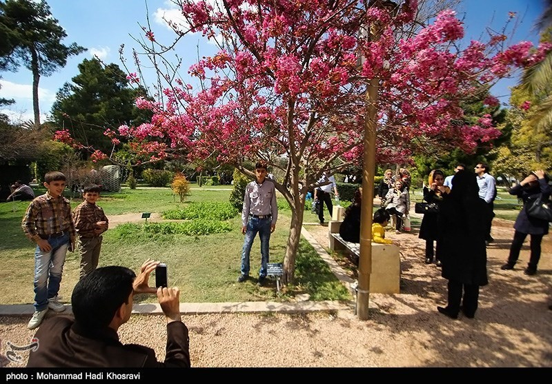 Eram Gardens: One of the Most Famous Historical Gardens in Iran
