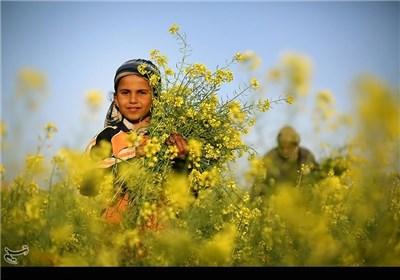 فصل بهار در فلسطین