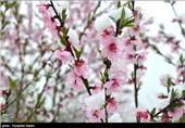 برف باز هم میهمان ناخوانده اردبیلیها در بهار