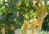 سیمای کشاورزی قزوین 3