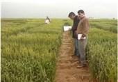 16 رقم جدید کشاورزی در اردبیل معرفی شد