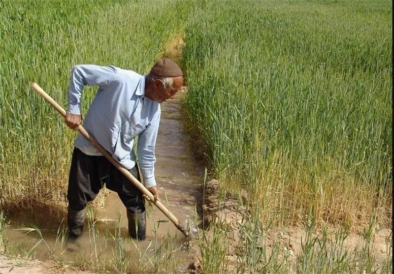 ایلام| 220 هزار تن گندم در ایلام برداشت میشود