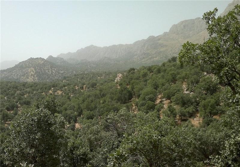 خشکیدگی 89 هزار هکتار از جنگلهای فارس؛ دو سوم جنگلهای زاگرس آسیب دید
