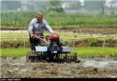 500 هکتار از اراضی رها شده استان گیلان زیر کشت برنج رفت