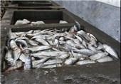 1800 تن ماهی پرورشی در خراسان رضوی تولید شد