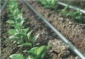 3 میلیارد ریال وام بلاعوض به کشاورزان آران و بیدگل ویژه اجرای طرح آبیاری نوین اختصاص یافت