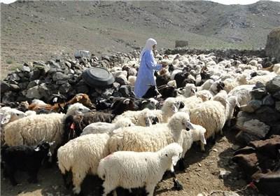 آبرسانی ماهانه به ۷ هزار نفر خانوار عشایری در خراسان جنوبی